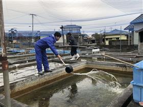 金魚養殖(1)