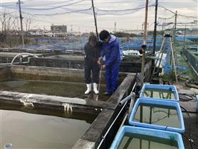 金魚養殖(2)
