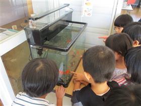 金魚PR応援事業3